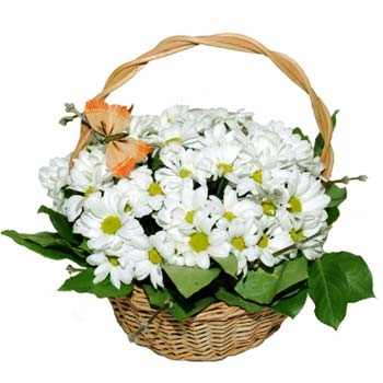 Lovely Chrysanthemums Basket