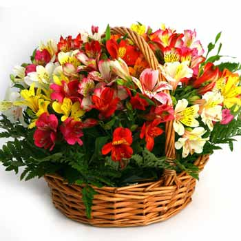 Multicolored Alstroemerias Basket